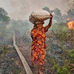 12 milioni di ettari di foreste in fumo