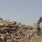 """Il bosco dimenticato e l'import di pellet illegale. """"In Italia non capiamo il valore degli alberi"""""""