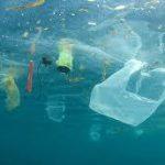 Se gli uccelli marini mangiano plastica