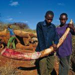 Alleanza online contro il traffico di specie protette